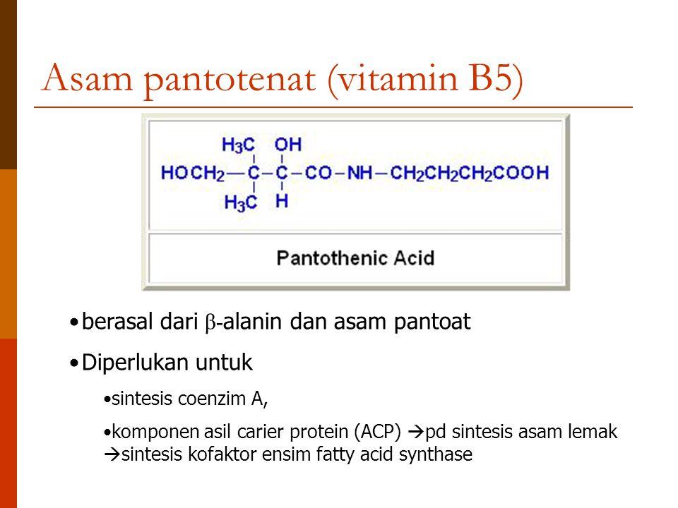 Asam pantotenat (vitamin B5) berasal dari β- alanin dan asam pantoat Diperlukan untuk sintesis coenzim A, komponen asil carier protein (ACP)  pd sint
