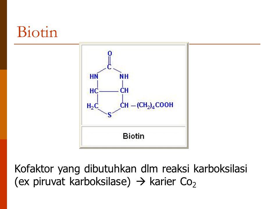 Biotin Kofaktor yang dibutuhkan dlm reaksi karboksilasi (ex piruvat karboksilase)  karier Co 2