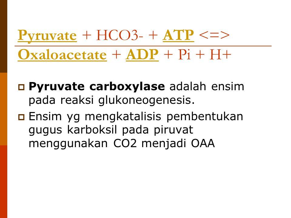 PyruvatePyruvate + HCO3- + ATP Oxaloacetate + ADP + Pi + H+ATP OxaloacetateADP  Pyruvate carboxylase adalah ensim pada reaksi glukoneogenesis.  Ensi