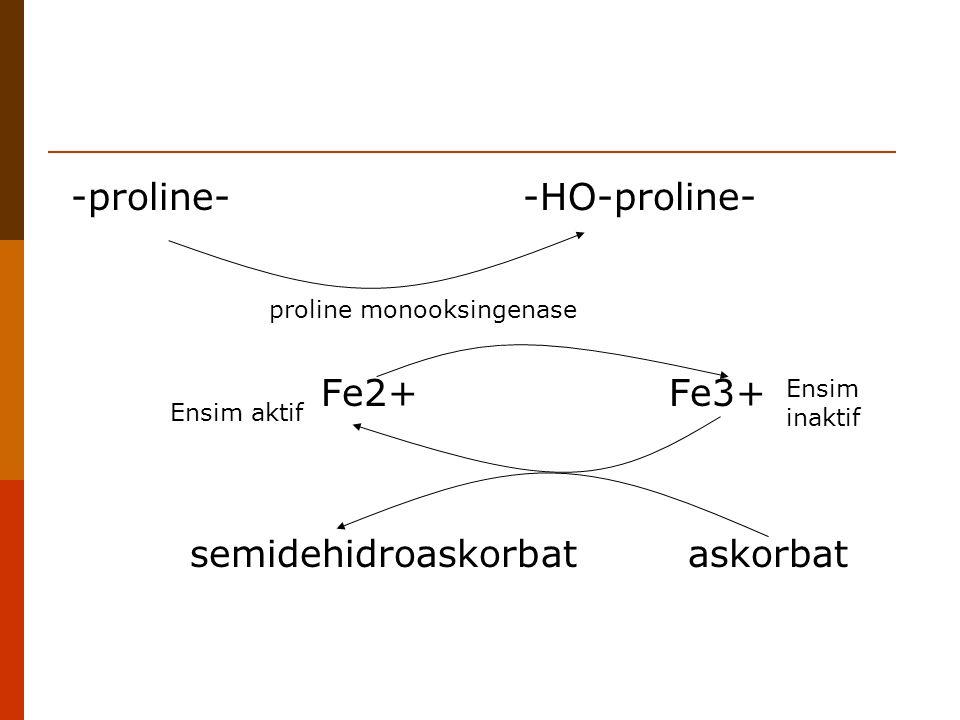 -proline- -HO-proline- proline monooksingenase Fe2+ Fe3+ semidehidroaskorbat askorbat Ensim inaktif Ensim aktif