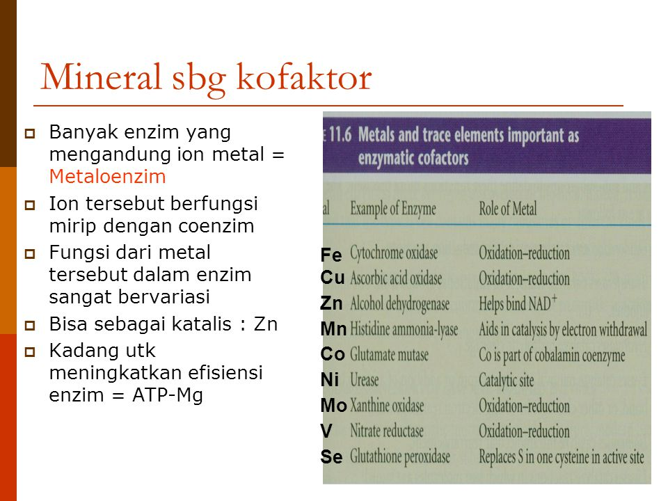 Mineral sbg kofaktor  Banyak enzim yang mengandung ion metal = Metaloenzim  Ion tersebut berfungsi mirip dengan coenzim  Fungsi dari metal tersebut