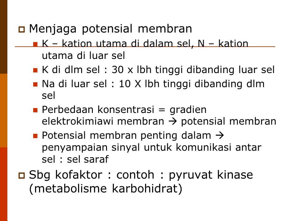  Menjaga potensial membran K – kation utama di dalam sel, N – kation utama di luar sel K di dlm sel : 30 x lbh tinggi dibanding luar sel Na di luar s