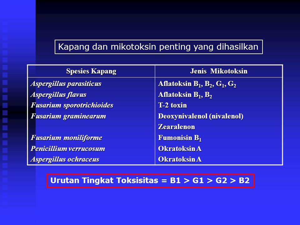 Kapang dan mikotoksin penting yang dihasilkan Spesies Kapang Jenis Mikotoksin Aspergillus parasiticus Aspergillus flavus Fusarium sporotrichioides Fus