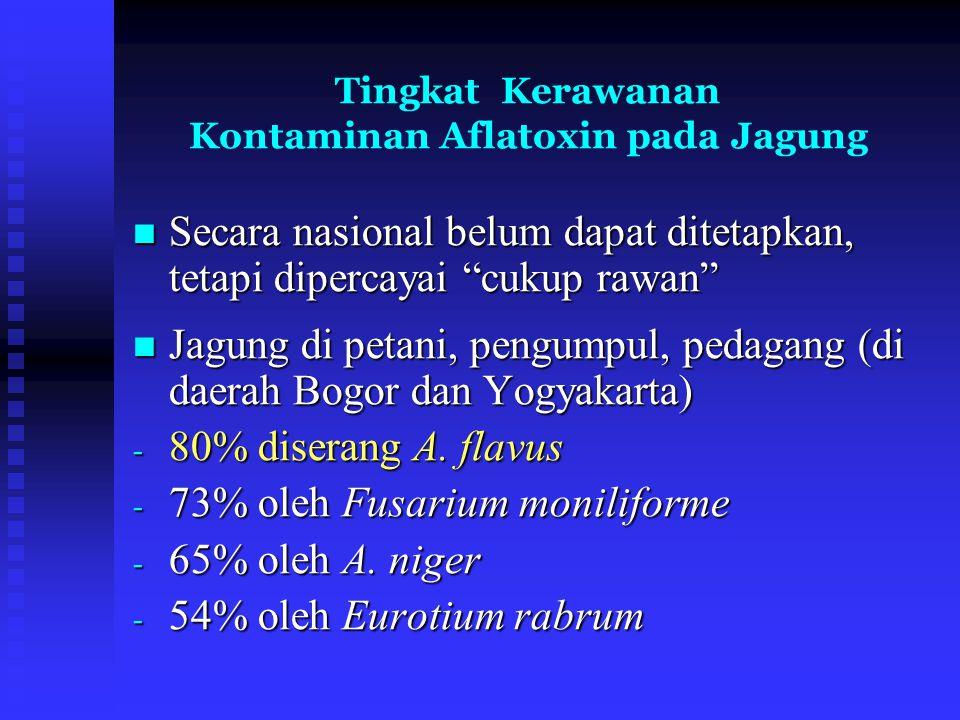 """Tingkat Kerawanan Kontaminan Aflatoxin pada Jagung Secara nasional belum dapat ditetapkan, tetapi dipercayai """"cukup rawan"""" Secara nasional belum dapat"""