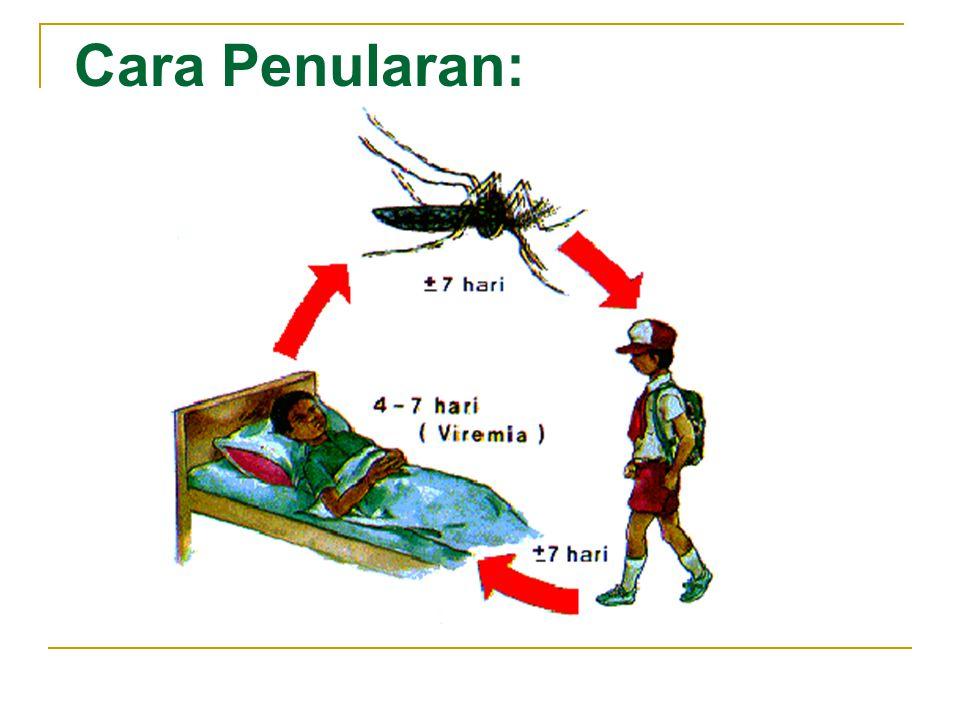 Pencegahan : Dengan cara 3M yaitu: