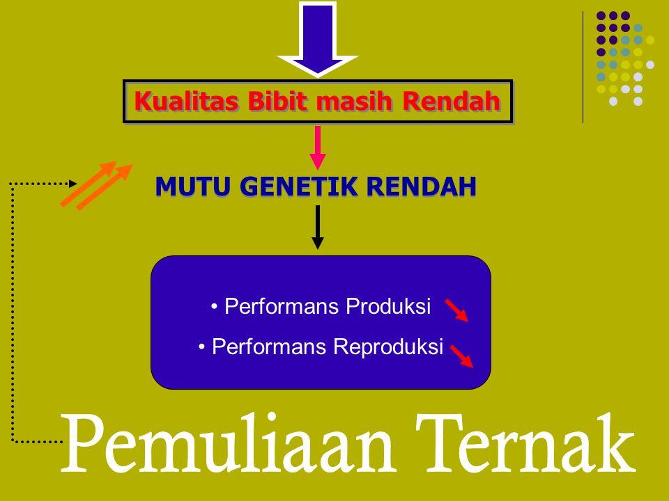 Kualitas Bibit masih Rendah MUTU GENETIK RENDAH Performans Produksi Performans Reproduksi
