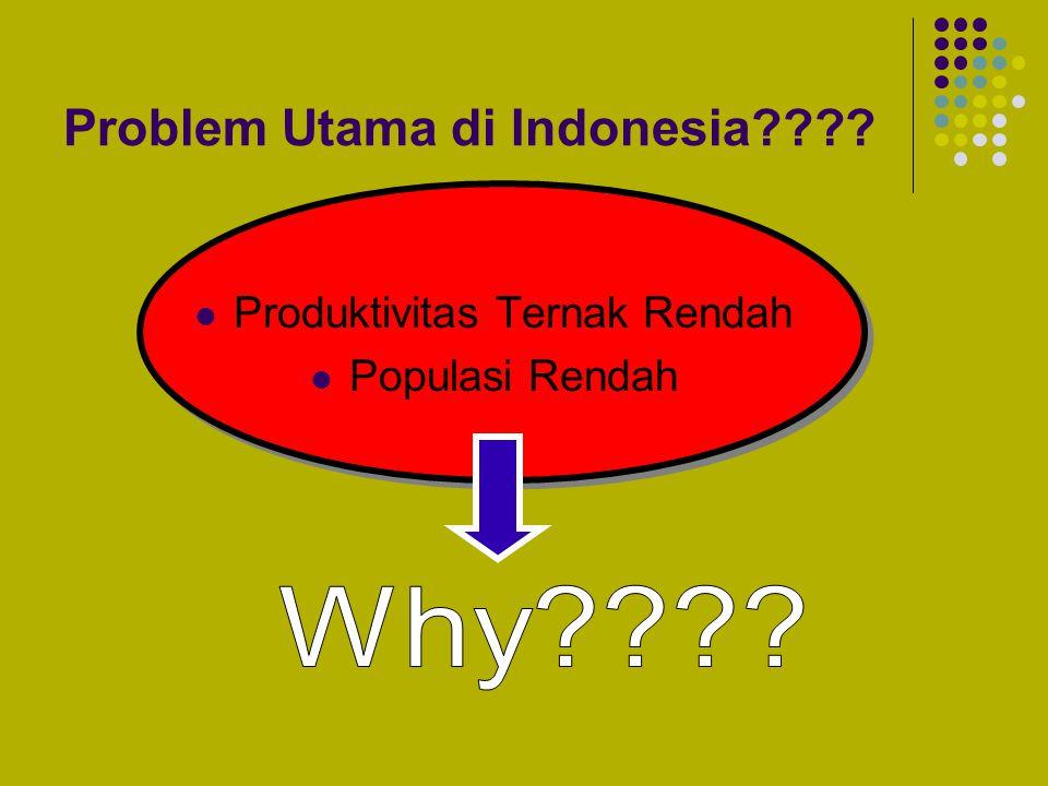Problem Utama di Indonesia???? Produktivitas Ternak Rendah Populasi Rendah