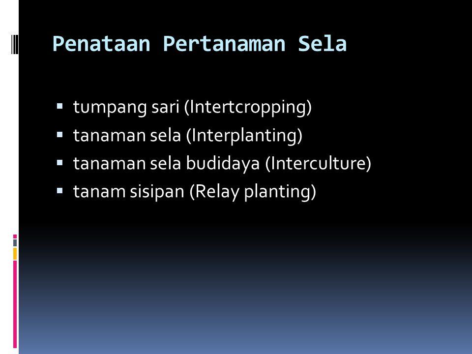 Penataan Pertanaman Sela  tumpang sari (Intertcropping)  tanaman sela (Interplanting)  tanaman sela budidaya (Interculture)  tanam sisipan (Relay planting)