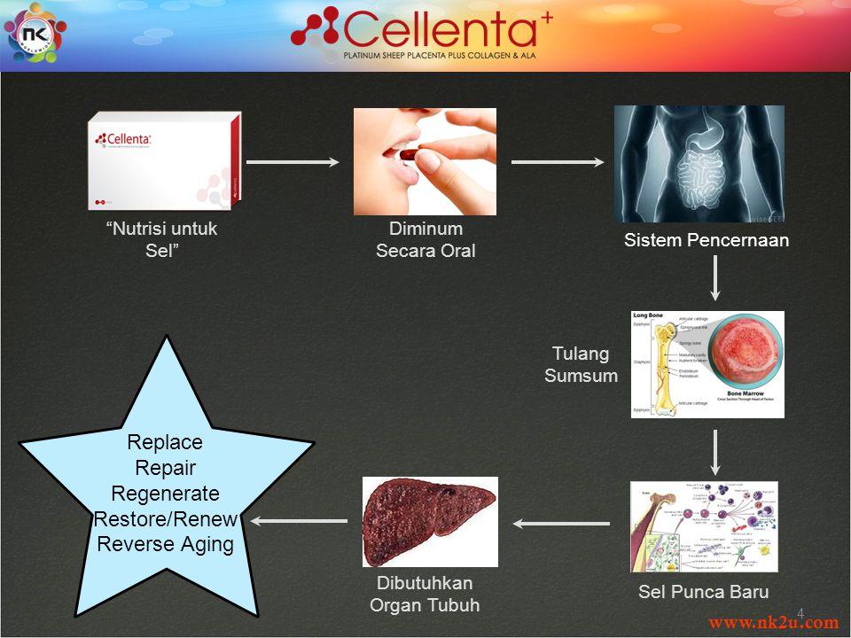 www.nk2u.com 4 Nutrisi untuk Sel Diminum Secara Oral Sistem Pencernaan Tulang Sumsum Sel Punca Baru Dibutuhkan Organ Tubuh Replace Repair Regenerate Restore/Renew Reverse Aging