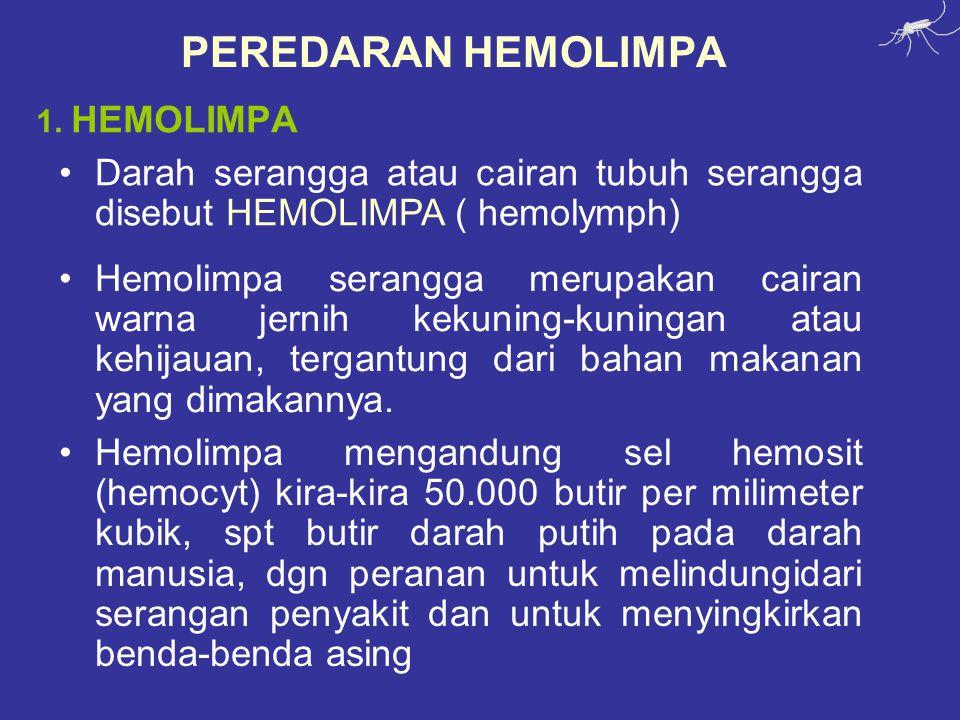 PEREDARAN HEMOLIMPA 1.
