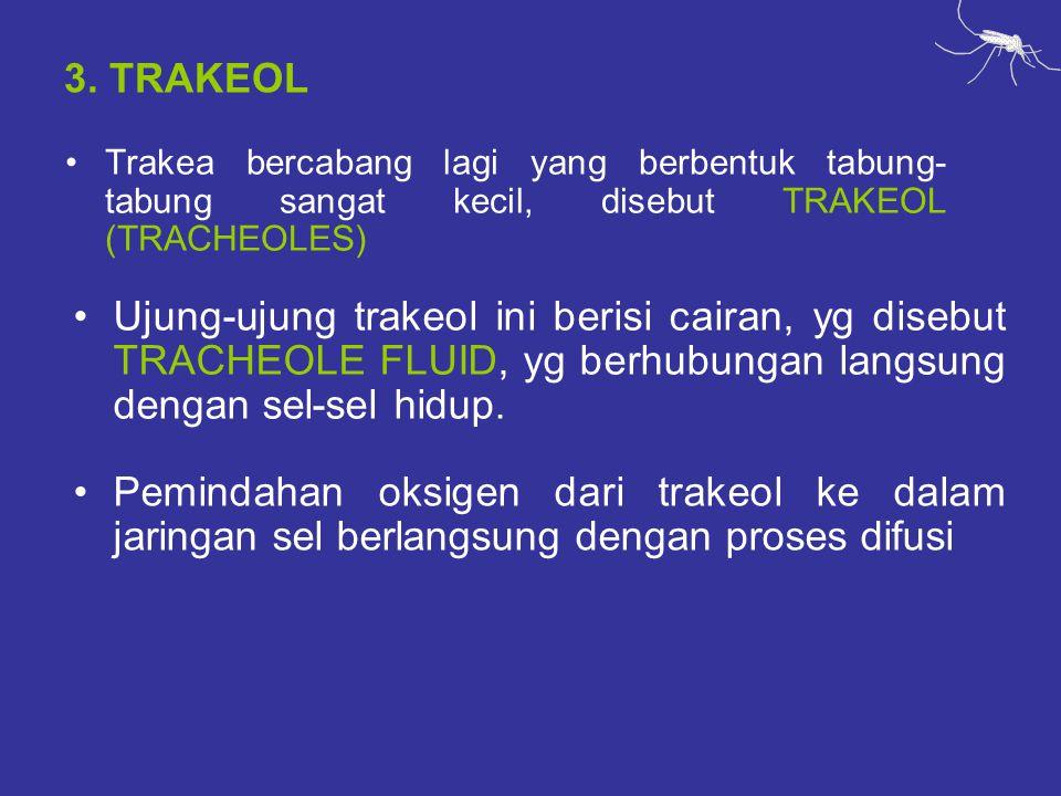 3. TRAKEOL Trakea bercabang lagi yang berbentuk tabung- tabung sangat kecil, disebut TRAKEOL (TRACHEOLES) Ujung-ujung trakeol ini berisi cairan, yg di