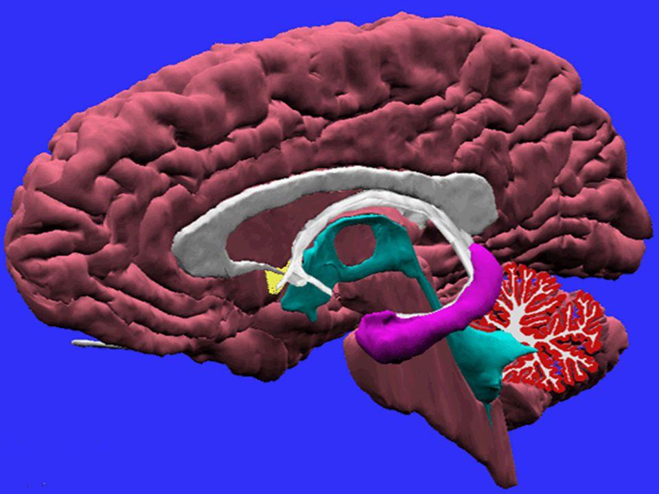 NAPZA (Narkotika, Psikotropika dan zat adiktif lainnya) bahan/zat yang bila masuk ke dalam tubuh akan mempengaruhi tubuh terutama susunan saraf pusat