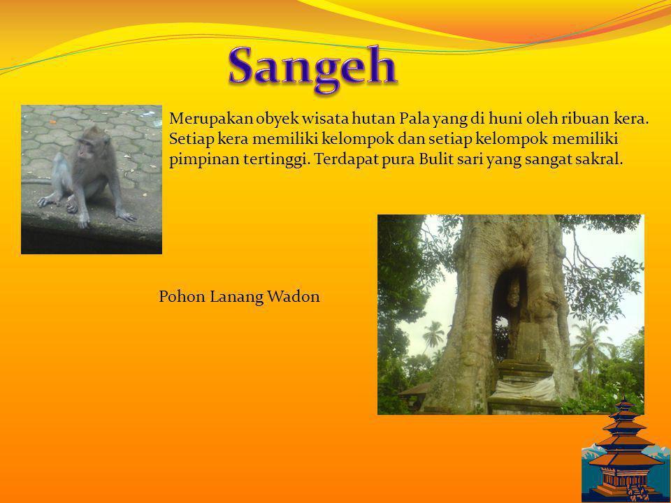 Merupakan obyek wisata hutan Pala yang di huni oleh ribuan kera.