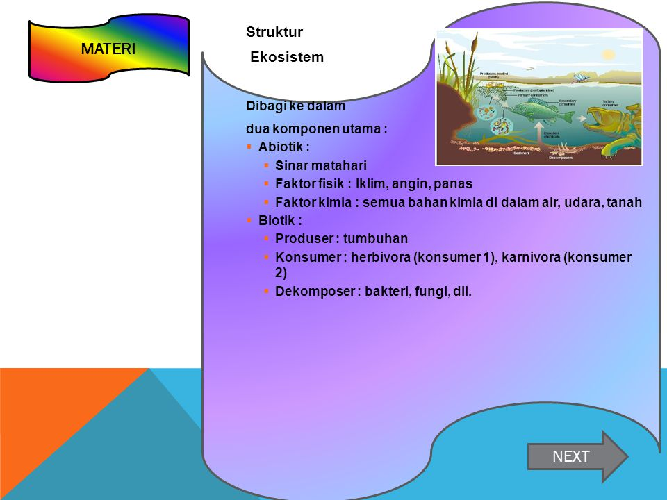 Struktur Ekosistem Dibagi ke dalam dua komponen utama :  Abiotik :  Sinar matahari  Faktor fisik : Iklim, angin, panas  Faktor kimia : semua bahan kimia di dalam air, udara, tanah  Biotik :  Produser : tumbuhan  Konsumer : herbivora (konsumer 1), karnivora (konsumer 2)  Dekomposer : bakteri, fungi, dll.