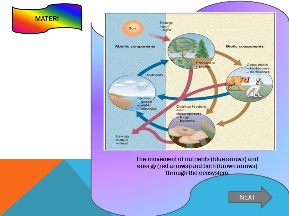 MATERI The movement of nutrients (blue arrows) and energy (red arrows) and both (brown arrows) through the ecosystem NEXT