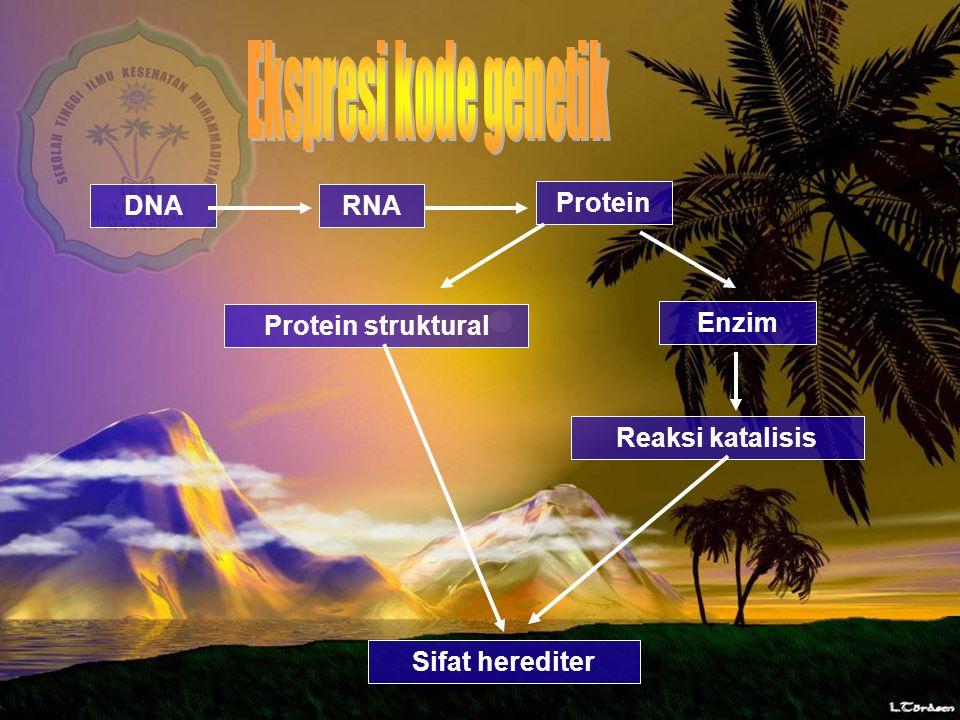DNARNA Protein Protein struktural Enzim Reaksi katalisis Sifat herediter