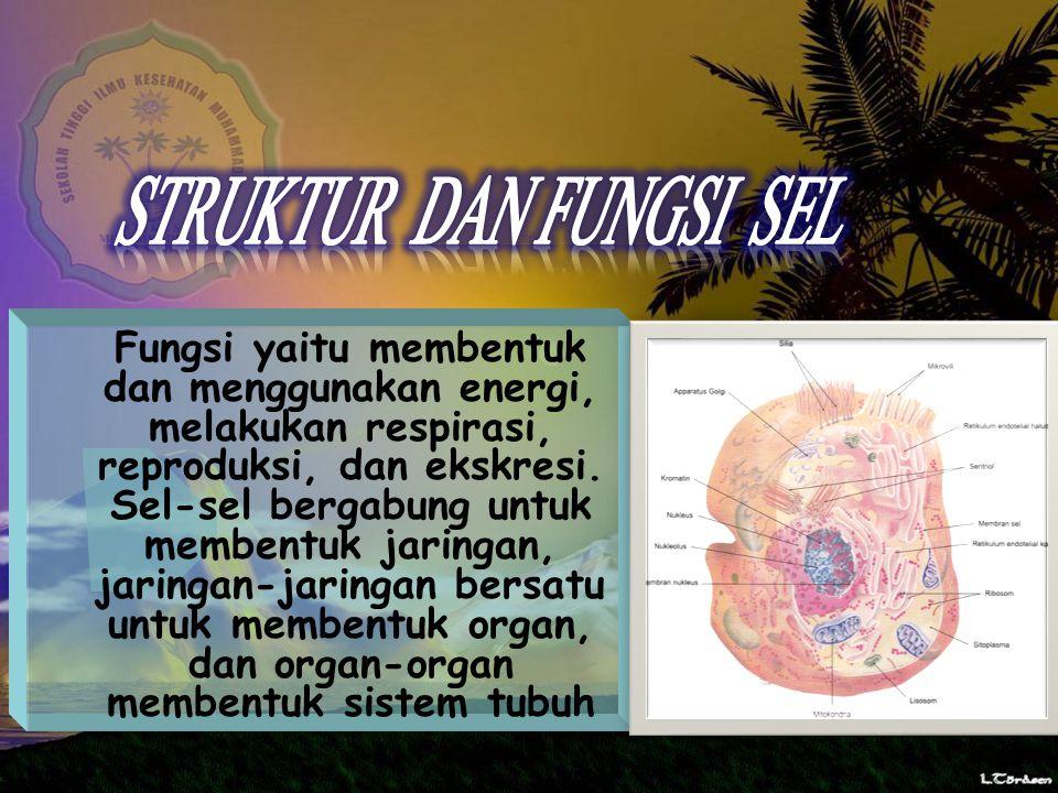 Fungsi yaitu membentuk dan menggunakan energi, melakukan respirasi, reproduksi, dan ekskresi.