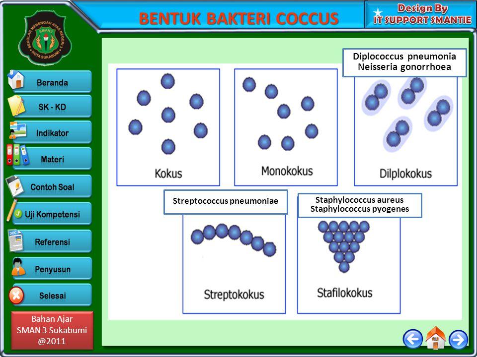 Bahan Ajar SMAN 3 Sukabumi @2011 Bahan Ajar SMAN 3 Sukabumi @2011 BENTUK BAKTERI COCCUS Diplococcus pneumonia Neisseria gonorrhoea Streptococcus pneum