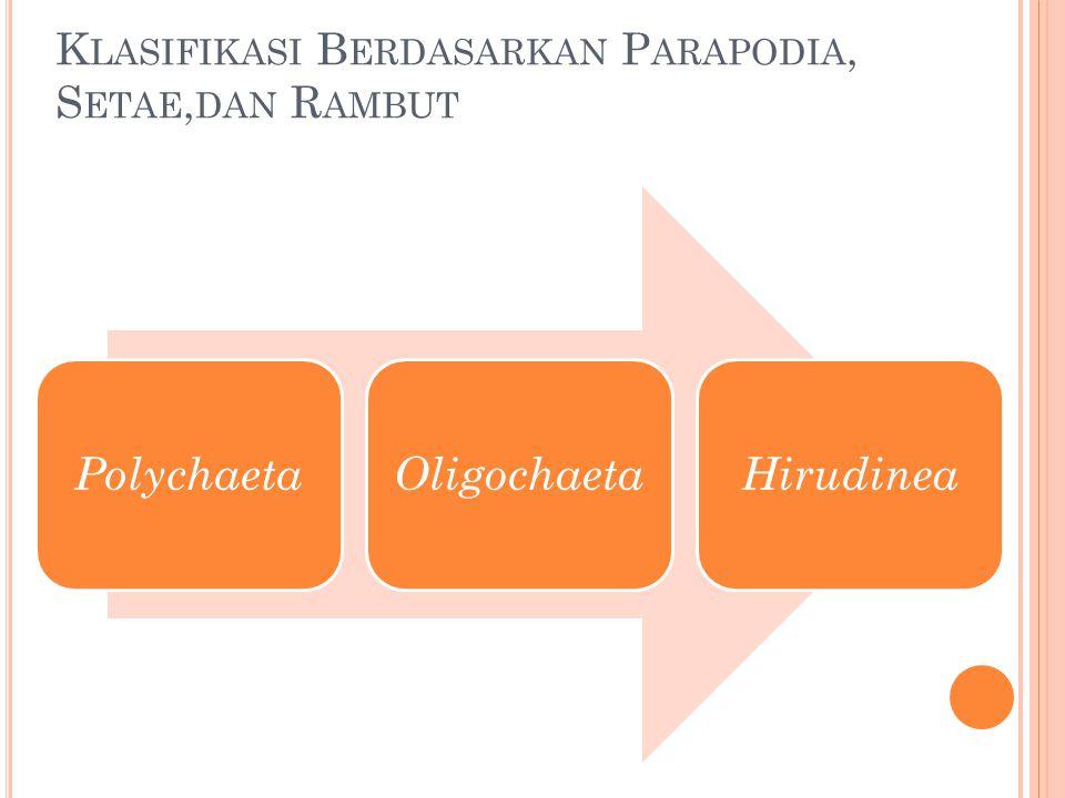 K LASIFIKASI B ERDASARKAN P ARAPODIA, S ETAE, DAN R AMBUT PolychaetaOligochaetaHirudinea