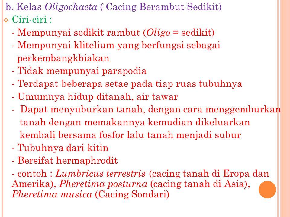 b. Kelas Oligochaeta ( Cacing Berambut Sedikit)  Ciri-ciri : - Mempunyai sedikit rambut ( Oligo = sedikit) - Mempunyai klitelium yang berfungsi sebag