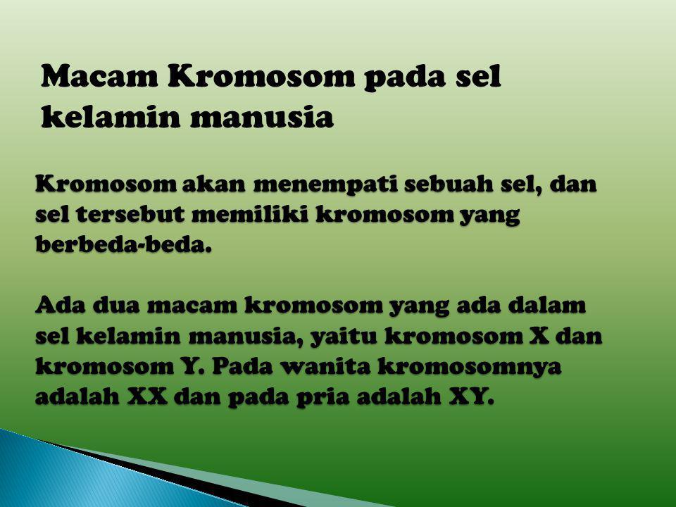 1. Kromosom Tubuh (Autosom) yaitu kromosom yang menentukan ciri- ciri tubuh. 2. Kromosom Kelamin (Gonosom) yaitu kromosom yang menentukan jenis kelami