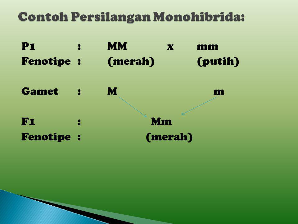  Persilangan dua individu sejenis dengan satu sifat beda Contoh:  Persilangan antara kacang ercis berbunga merah dominan (MM) dengan kacang ercis be