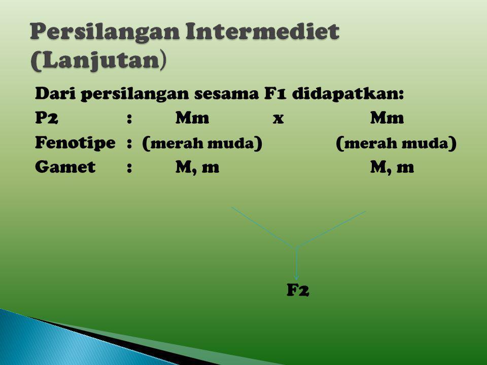 P1:MMxmm Fenotipe:(merah)(putih) Gamet: Mx m F1: Mm Fenotipe:(merah muda)