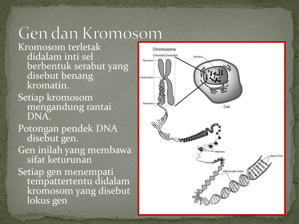 Di dalam sel, kromosom berpasang-pasangan dengan bentuk, ukuran dan komposisi yang sama (kromosom homolog) Sel tubuh memiliki dua set kromosom sehingga bersifat diploid Sel kelamin memiliki satu set kromosom sehingga bersifat haploid Sifat-sifat keturunan, diturunkan induk pada keturunannya melalui sel kelamin.
