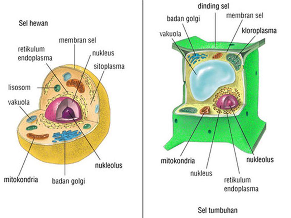 BY LILI ANDAJANI, M.Pd KETENTUAN P = parental = induk F = filial = anak G = gamet = sel kelamin Genotipe = susunan gen di dalam tubuh (disimbolkan dengan huruf) Fenotipe = sifat yang nampak Homozygot = individu yang memiliki pasangan gen yang sama persis.