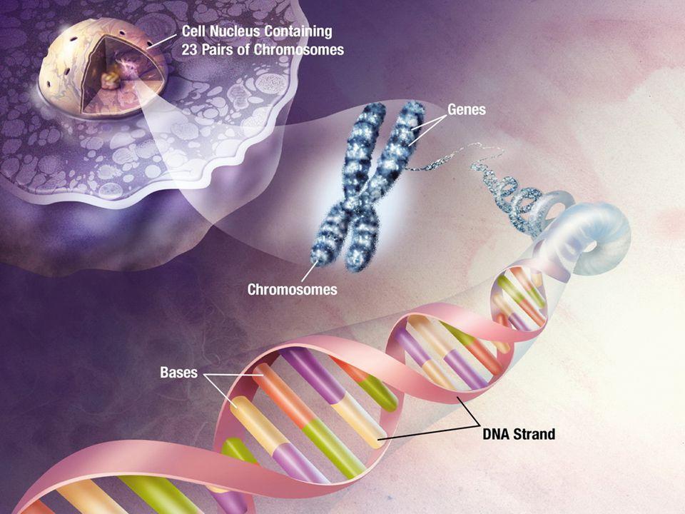 Didalam setiap sel terdapat faktor pembawa sifat.