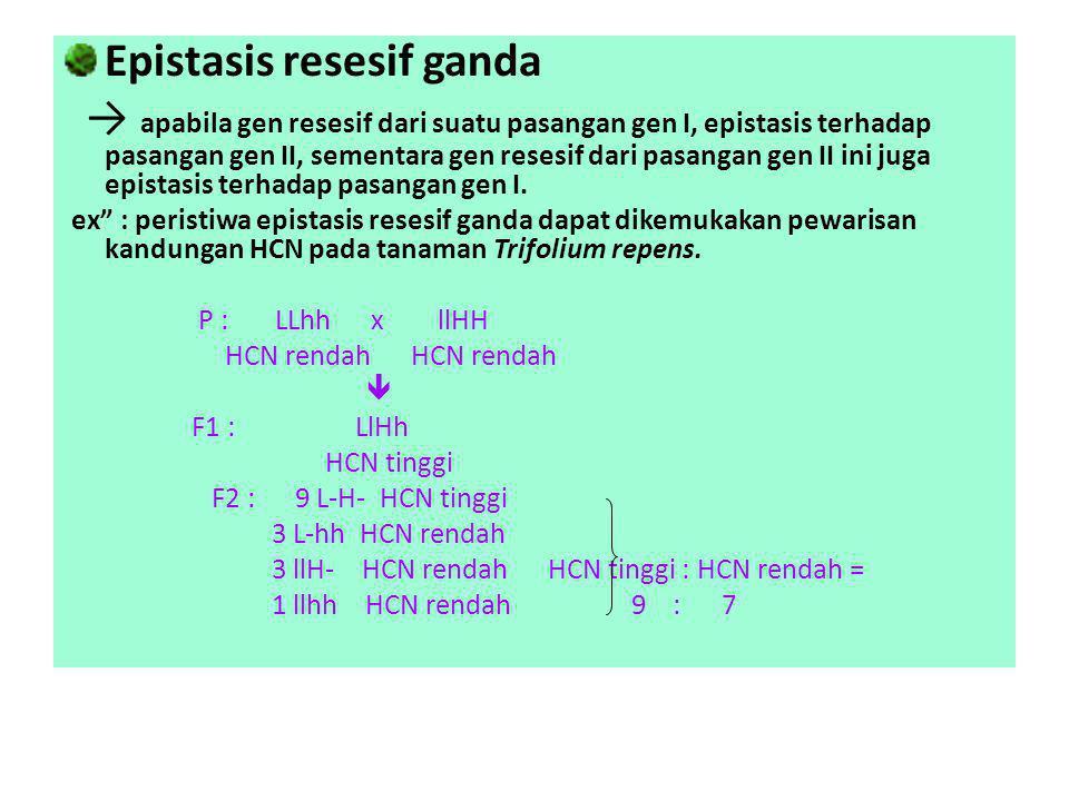 Epistasis resesif ganda → apabila gen resesif dari suatu pasangan gen I, epistasis terhadap pasangan gen II, sementara gen resesif dari pasangan gen I