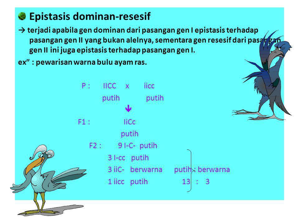 Epistasis dominan-resesif → terjadi apabila gen dominan dari pasangan gen I epistasis terhadap pasangan gen II yang bukan alelnya, sementara gen reses