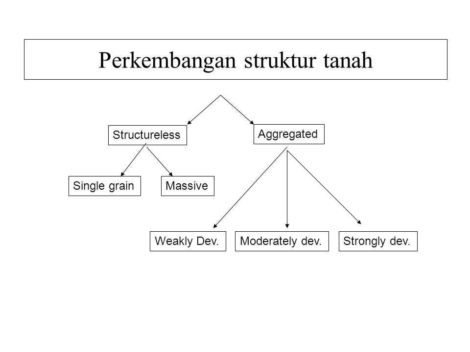 Perkembangan struktur tanah Structureless Aggregated MassiveSingle grain Weakly Dev.Moderately dev.Strongly dev.
