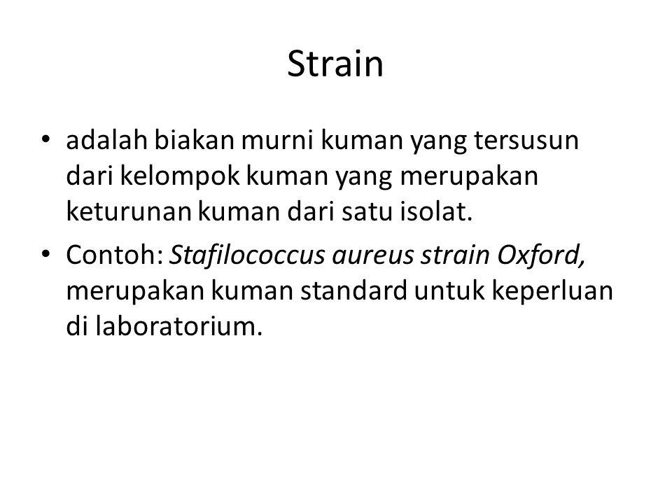 Strain adalah biakan murni kuman yang tersusun dari kelompok kuman yang merupakan keturunan kuman dari satu isolat. Contoh: Stafilococcus aureus strai