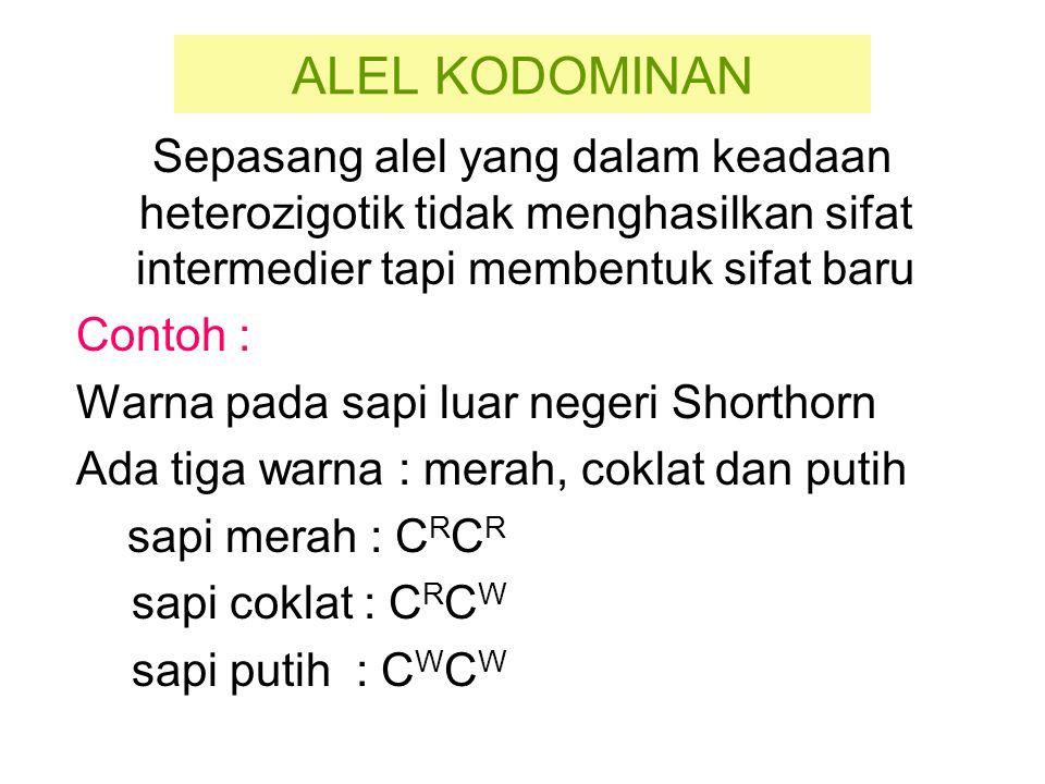 Penurunan Alel Kodominan P C R C W x C R C W (coklat) (coklat) F1 C R C R = sapi merah C R C W = sapi coklat C W C W = sapi putih