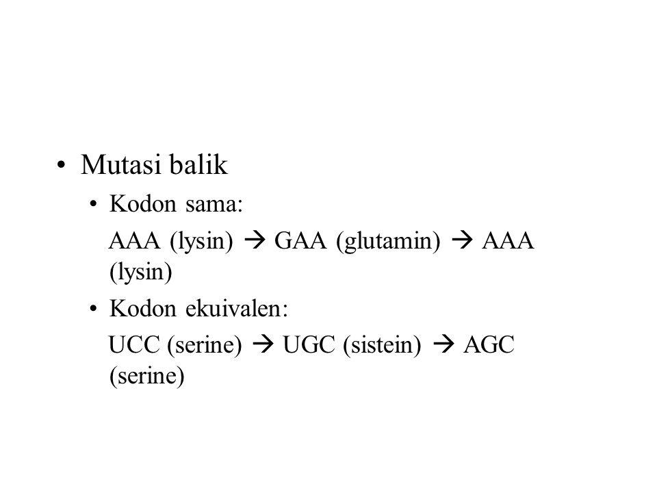 Mutasi balik Kodon sama: AAA (lysin)  GAA (glutamin)  AAA (lysin) Kodon ekuivalen: UCC (serine)  UGC (sistein)  AGC (serine)
