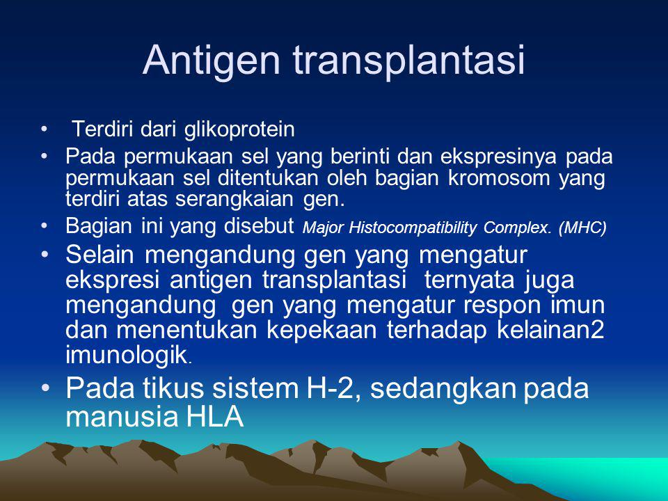 Major Histocompatibility Complex (MHC) Pertama kali terungkap pada pertengahan tahun1950 Serum penderita transfusi darah ada antibodi yang dapat menggumpalkan leukosit Antigen yang bereaksi dengan antibodi adalah aloantigen Antigen ini dapat menyebabkan penolakan jaringan transplantasi, antigen transplantasi
