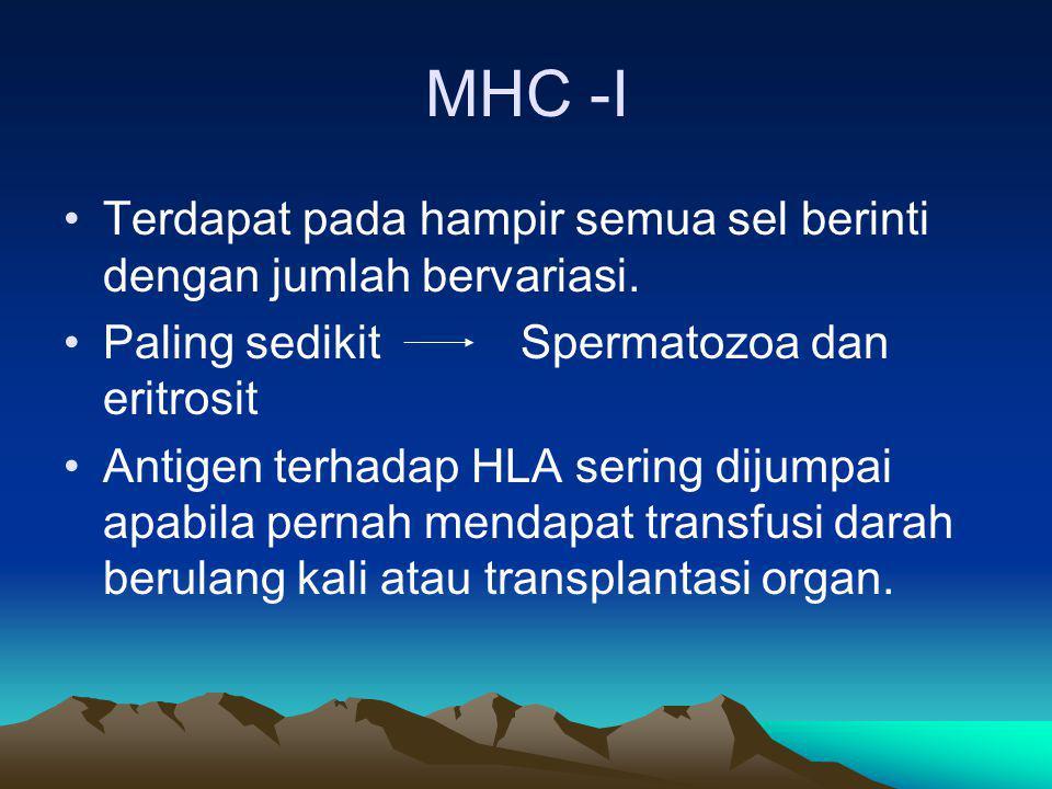Distribusi MHC Pada man dibagi 2 Antigen Kelas I yang mencakup HLA-A, HLA-B, HLA-C Antigen kelas II yang meliputi : HLA-D, HLA-DR, HLA-DQ, HLA-DP Kelas III yang mencakup komponen C2 dan C4 dari komplemen dan faktor B properdin (BF)