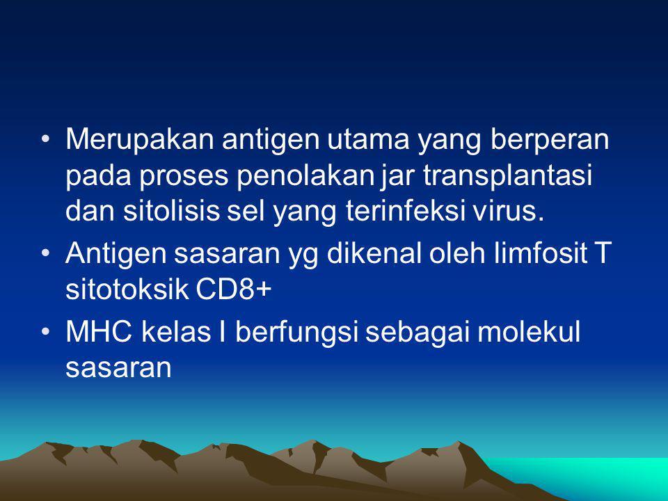 MHC -I Terdapat pada hampir semua sel berinti dengan jumlah bervariasi.