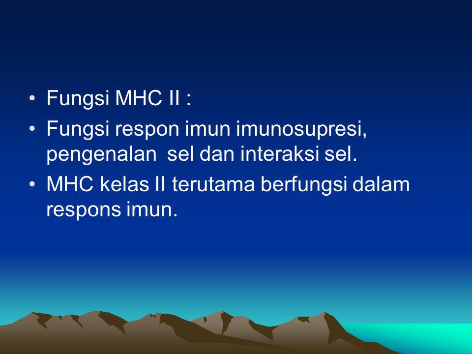 MHC II Antigen MHC kelas II terutama dijumpai pada permukaan sel-sel imunokompeten.( makrofag, /monosit, limfosit B,limfosit T teraktivasi) Limfosit T dalam keadaan istirahat hanya menampilkan sedikit sekali antigen kelas II dan sel-sel retikulo endotel.