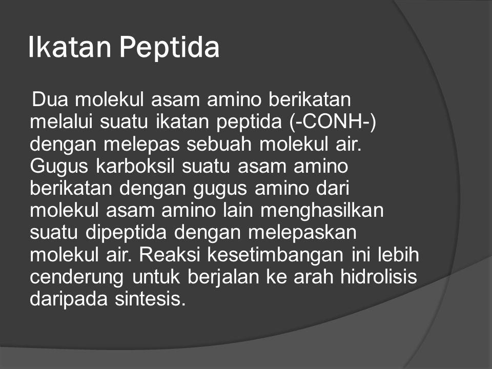 Ikatan Peptida Dua molekul asam amino berikatan melalui suatu ikatan peptida (-CONH-) dengan melepas sebuah molekul air. Gugus karboksil suatu asam am