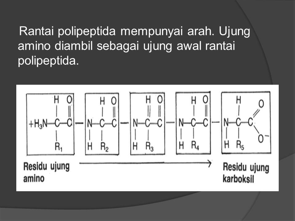 Rantai polipeptida mempunyai arah. Ujung amino diambil sebagai ujung awal rantai polipeptida.