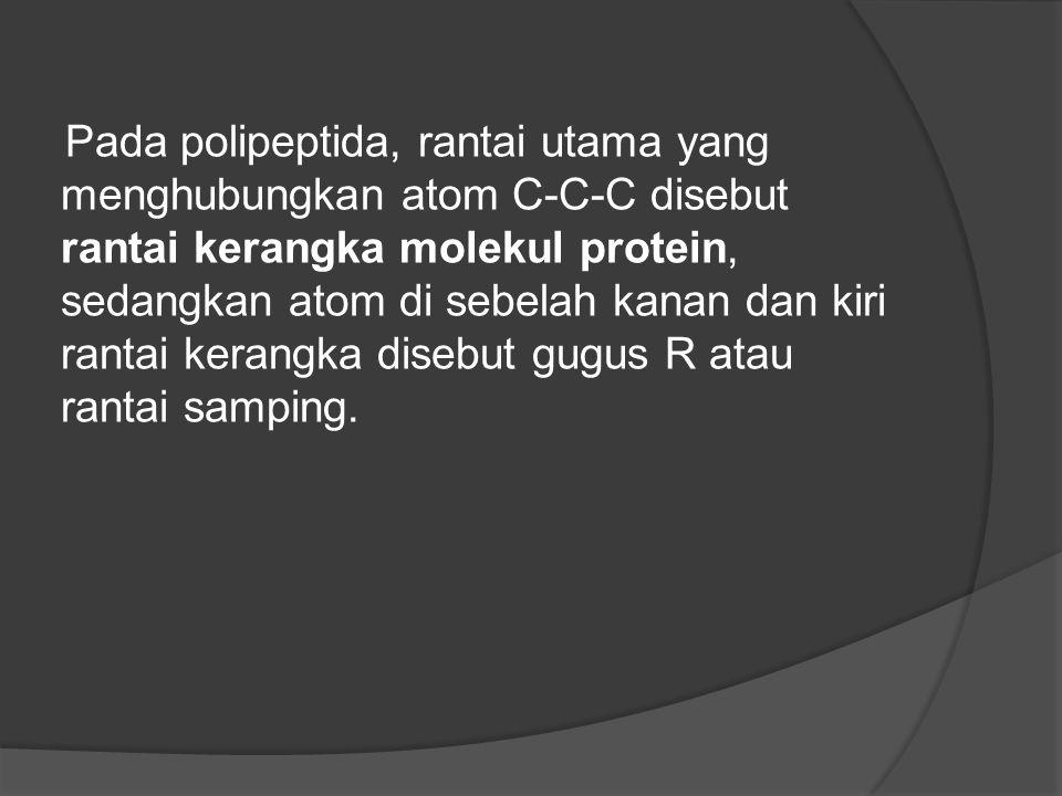 Pada polipeptida, rantai utama yang menghubungkan atom C-C-C disebut rantai kerangka molekul protein, sedangkan atom di sebelah kanan dan kiri rantai