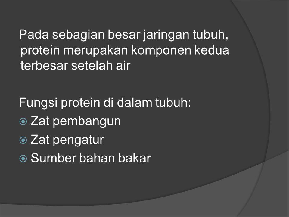 Pada sebagian besar jaringan tubuh, protein merupakan komponen kedua terbesar setelah air Fungsi protein di dalam tubuh:  Zat pembangun  Zat pengatur  Sumber bahan bakar