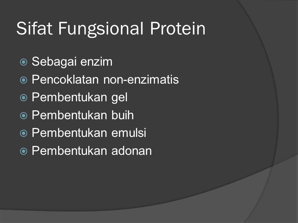 Sifat Fungsional Protein  Sebagai enzim  Pencoklatan non-enzimatis  Pembentukan gel  Pembentukan buih  Pembentukan emulsi  Pembentukan adonan