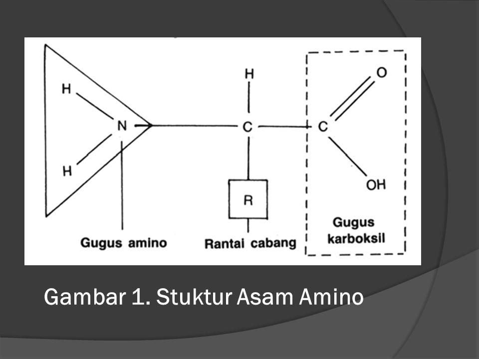  Asam amino dalam kondisi netral (pH isoelektrik, pI, yaitu antara 4,8 – 6,3) berada dalam bentuk ion dipolar (ion zwitter)  Apabila asam amino berada pada kondisi pH lebih kecil dari pI, maka asam amino menjadi bermuatan positif  Apabila pH lebih besar dari pI, maka asam amino menjadi bermuatan negatif.