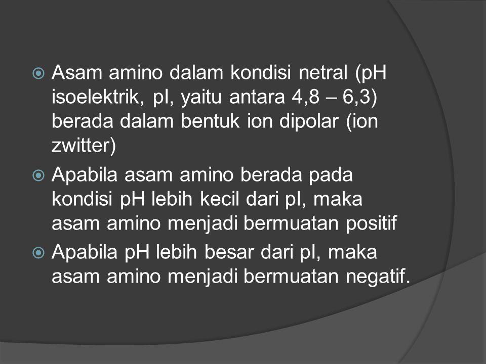  Asam amino dalam kondisi netral (pH isoelektrik, pI, yaitu antara 4,8 – 6,3) berada dalam bentuk ion dipolar (ion zwitter)  Apabila asam amino bera