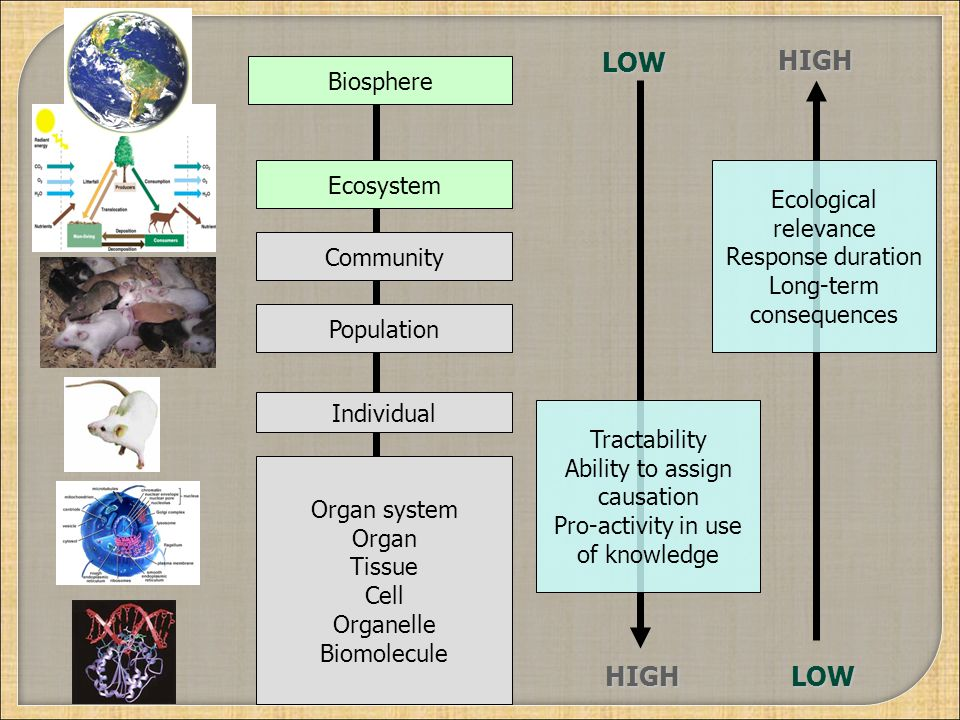 Organ system Organ Tissue Cell Organelle Biomolecule Individual Population Community Ecosystem Biosphere Tractability Ability to assign causation Pro-activity in use of knowledge Ecological relevance Response duration Long-term consequences HIGH HIGH LOW LOW