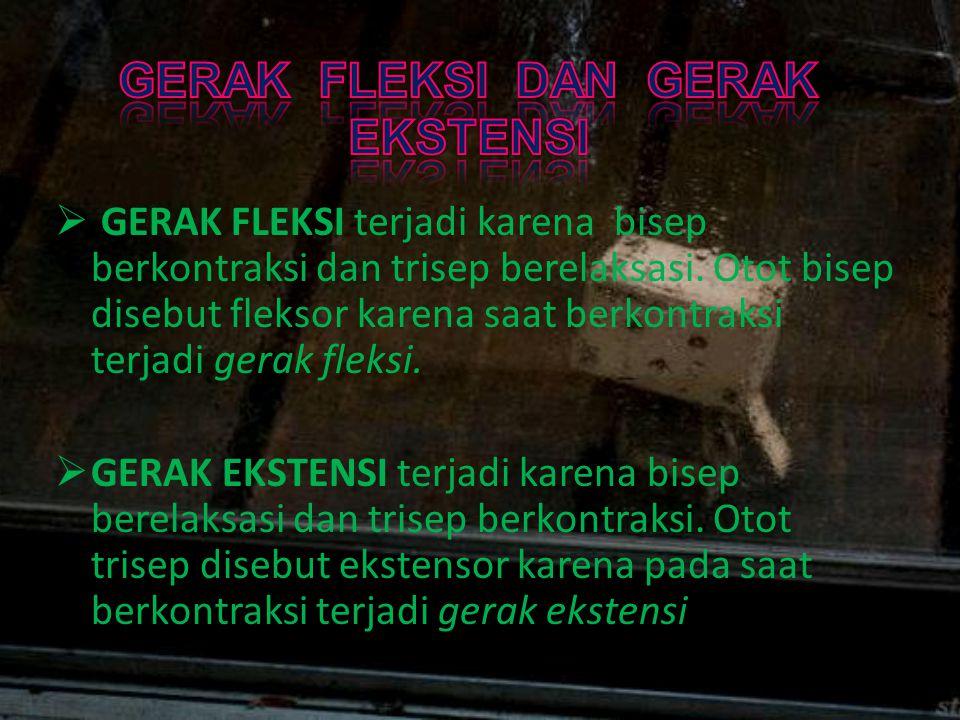  GERAK FLEKSI terjadi karena bisep berkontraksi dan trisep berelaksasi. Otot bisep disebut fleksor karena saat berkontraksi terjadi gerak fleksi.  G