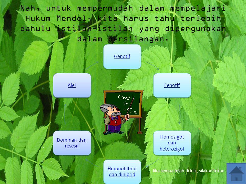 Biji warna kuning dibandingkan dengan biji warna hijau Buah berwarna hijau dibandingkan dengan buah berwarna kuning Buah mulus dibandingkan buah berle